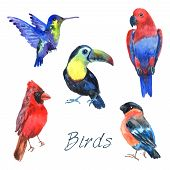 image of rainforest  - Tropical rainforest parrot birds with beautiful plumage and curved beaks watercolor pictograms collection abstract isolated vector illustration - JPG