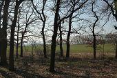 stock photo of bohemia  - Bare trees in Northern Bohemia - JPG