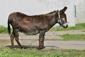 stock photo of donkey  - bright picture funny a donkey sunny day - JPG