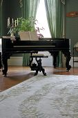 Piano With Rug