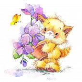 picture of baby cat  - Cat - JPG