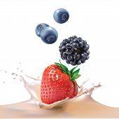 picture of blackberries  - blackberries - JPG
