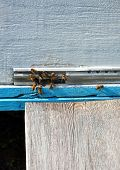 foto of honey bee hive  - bee hive with bees on it for your design - JPG