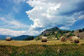 foto of hay bale  - Freshly rolled hay bales in a field - JPG