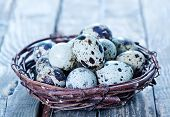 foto of quail egg  - quail eggs in the nest and on a table - JPG