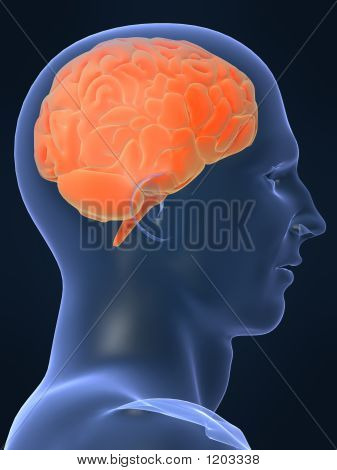Picture or Photo of 3d rendered illustration of a human brain