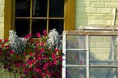 Windowboxflowers
