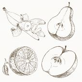 Постер, плакат: Sketch of half fruits