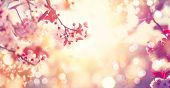 Spring border or background art with pink blossom. Beautiful nature scene with blooming tree and sun poster