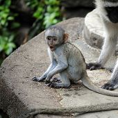 Astonished baby monkey
