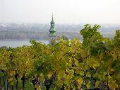 Herbst Weinberg in Österreich