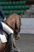 Classical Equitation Horse