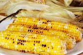 foto of corn-silk  - Cleaning three freshly roasted ears of corn on cob with shucked husks in background - JPG