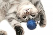 The Grey Cat Plays With A Dark Blue New Year'S Toy poster