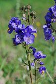 medicinale plant
