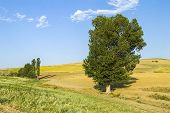 The Most Beautiful Continental Climate Summer Bear Landscape Pictures, Continental Climate Nature La poster
