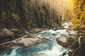 Mighty mountain river flowing through the coniferous forest in the Tatras Mountains in Slovakia. The poster