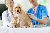 Vet Examining Dog And Cat. Puppy And Kitten At Veterinarian Doctor. Animal Clinic. poster