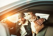 Man Traveling With His Beagle Dog By Auto poster