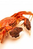 Cooked Chinese hairy crab isolated on white poster