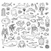 Big Set Of Cute Hand Drawn Marine Animals, Fish And Shells. Vector Outline Background. May Use As Co poster