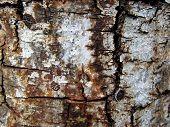 Macro tree bark background 3