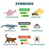 Symbiosis Vector Illustration. Labeled Living Together Explanation Educational Scheme. Mutualism, Co poster