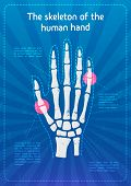 Vector Skeleton Hands. X-ray Of The Hand Bones.the Concept Of A Flyer Or Poster With Infographics Ab poster