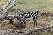 Amboseli Game Reserve