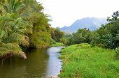 Tranquil Stream In Lush Rainforest