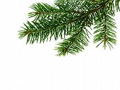 Fir Tree Branch Isolated On White Background. Pine Branch. Christmas Background. poster