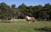 Tabby Pony