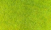 Aerial Top View Of Green Fresh Summer Lawn In Park. Natural Textured Background. Top View From Drone poster