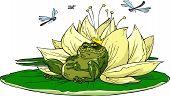 Toad auf Lilie