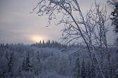 Mid Day Near The Artic Circle November Alaska