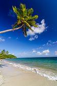 Palm Tree Over White Sand Beach