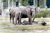 Baby Elephant Mpumi
