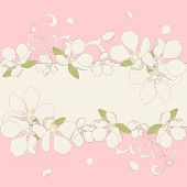 picture of apple blossom  - Vector illustration - JPG