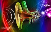 pic of eardrum  - digital illustration of Ear anatomy in colour background - JPG