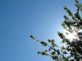 Strahlen der Sonne