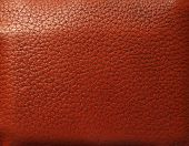 image of crocodilian  - Brown leather - JPG