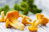 Chanterelle, autumn harvest - Fresh chanterelle mushrooms on a table