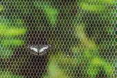Butterfly On Netted Background