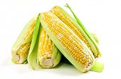Ears of fresh corn isolated on white background