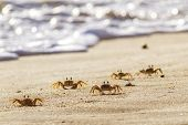 Crabs On Sand Beach