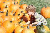 Child Picking A Pumpkin