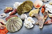 Different types of marine life from Atlantic ocean in Newfoundland, Canada