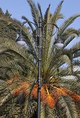 street lamp in front of palm tree