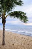 Palm tree on tropical beach in Puerto Vallarta, Jalisco, Mexico