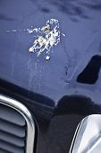 stock photo of feces  - Closeup of bird droppings on car hood - JPG